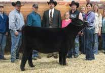 3040 is a full sib to DPL Sandy 3105, who was the Reserve Grand Champion Owned Heifer at the 2015 National Junior Angus Show and is the dam of Dal Porto Noble T154 the Division winner at the 2017