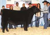 HEIFER EMBRYOS The elite Angus donor dam of the IVF embryos selling as Lots 27A through 27C, J&J Queen 414, has been proclaimed by many as Northern Improvement s greatest daughter.