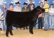Progeny of 414 have dominated the show circuit and recently include: the 2015 Oklahoma Youth Expo Supreme Champion Female, sired by First Class and shown by the Myers family, that was also a division