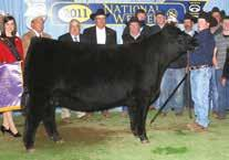 2016 bull +*18505288 tattoo: 115D ERON FIRST CLASS SILVEIRAS FIRST REACTION2510 EXG SARAS DREAM S609 R3 EXG RS FIRST RATE S903 R3 ERON NORTHERN MISS 3114 BR MIDLAND EXAR SARAS DREAM 9809 SITZ DASH