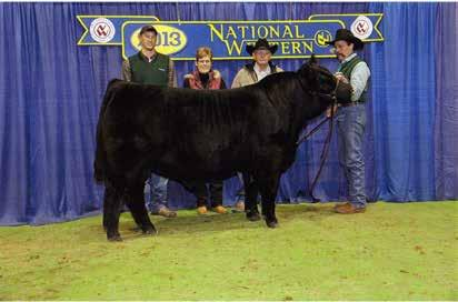 His sire was a two time Reserve National Champion Balancer Bull and his dam was a NAILE Reserve Grand Champion Female. BABR 114Y ET B BABR 114Y ET Homozygous Black/Polled BA25 Calved: 2/19/2011 Reg.