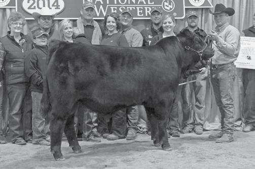 Genetic Power SPRING GELBVIEH AND BALANCER BULLS DLW ALUMNI 7513A ET Sire of Lots 43, 44. 43 HTFG MR.
