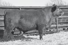 Genetic Power FALL GELBVIEH AND BALANCER BULLS JEMG LEE ANN 650U Dam of Lots 14-22.