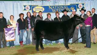54 / 11 Has sired some of the most dominant show heifers of recent times. Will increase extension, muscle shape and foot quality.