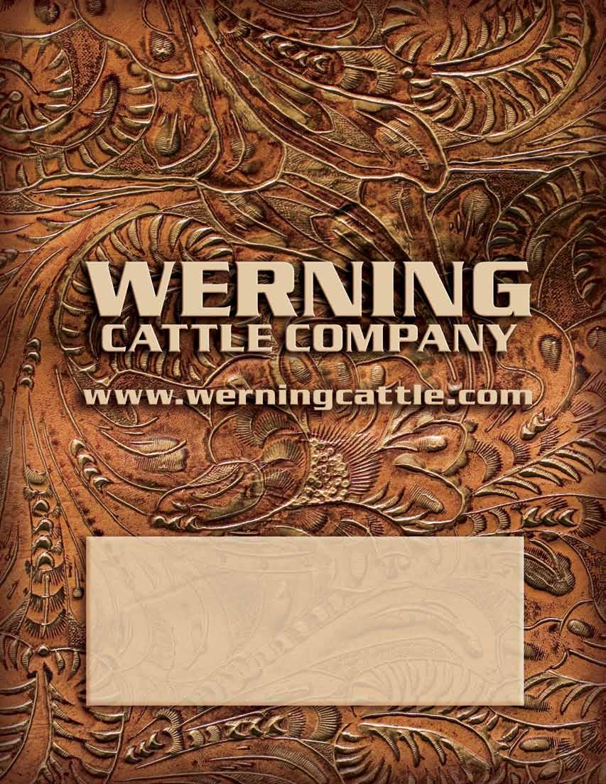 Werning Cattle