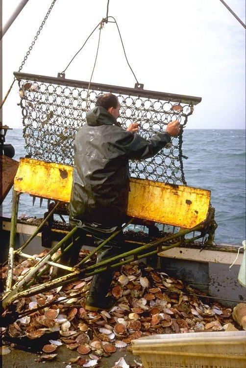 fisheries in Brittany.