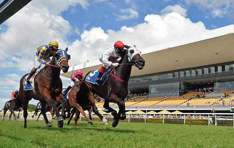 First Metro Winner: Perplexity (Lonhro x Secret Haze) 11/04/2015 at Doomben over 2200m by 0.