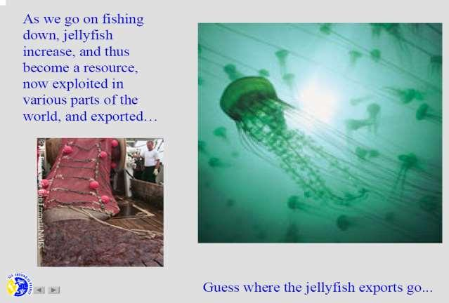 DOOM AND GLOOM Soon we ll be eating jellyfish and plankton stew ''With few