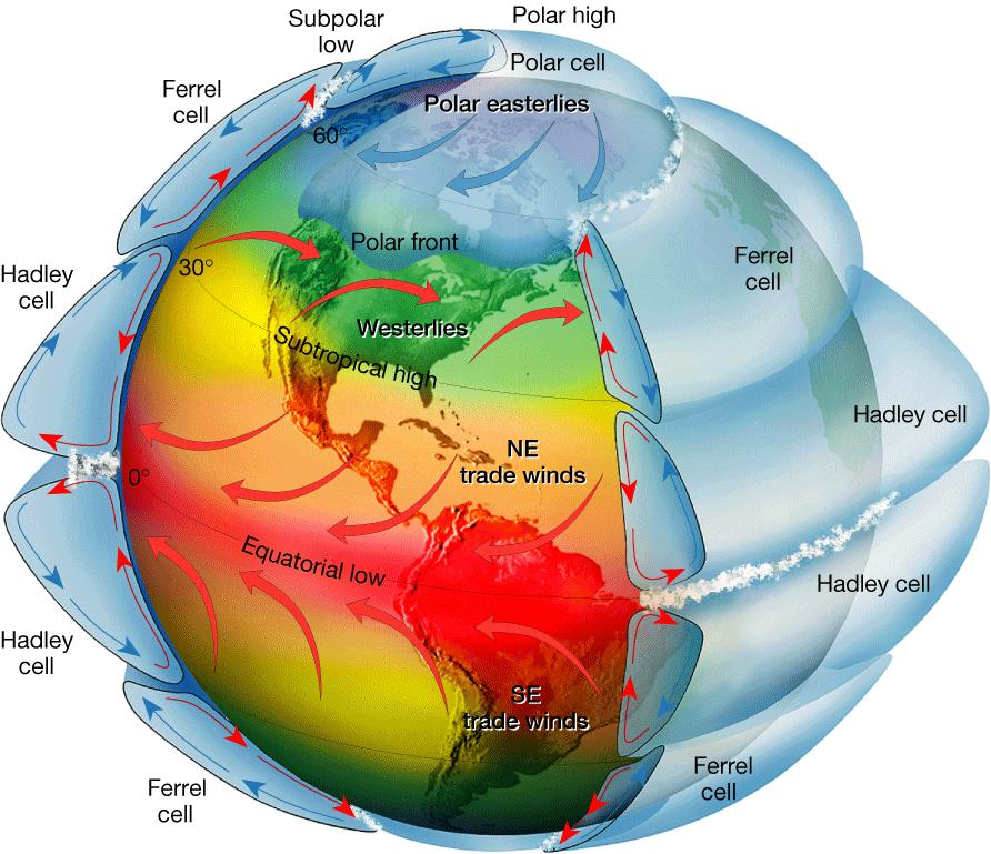 Rotating Earth Model If the effect of rotation were added to the global circulation model, the two-cell convection system would break down into smaller cells.