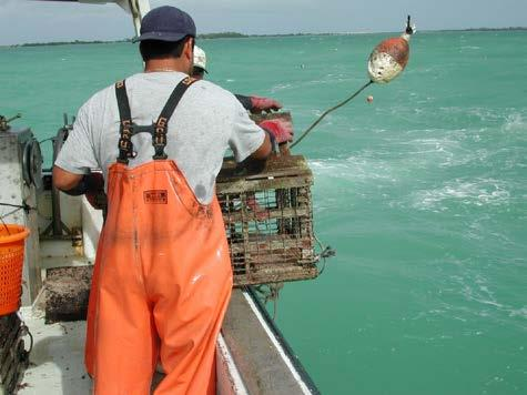 Trap Fisheries Direct management of fishery, indirect effect on habitat Spiny lobster, stone crab, blue crab On passive trap reduction