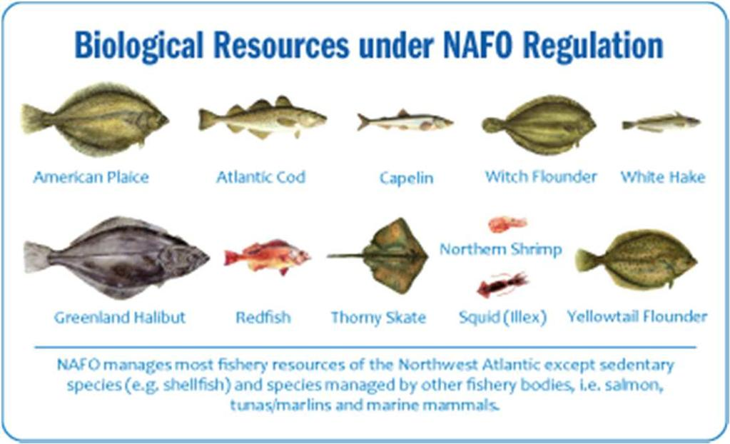 NAFO Convention and Regulatory Area NAFO is an RFMO responsible for managing the fish stocks (except salmon,