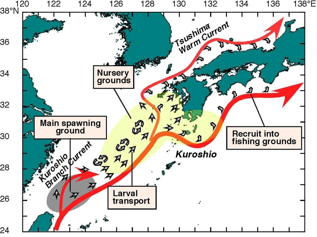 Conclusion (1) Taiwan Schema showing the main spawning ground, larval