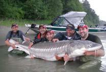 The popularity of our sturgeon fishery has spread world wide and has created a fanatical following. With fish in the river over 1000lbs.