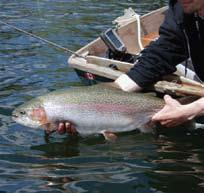 and acrobatic rainbows. Fishing action no sport angler can afford to miss!