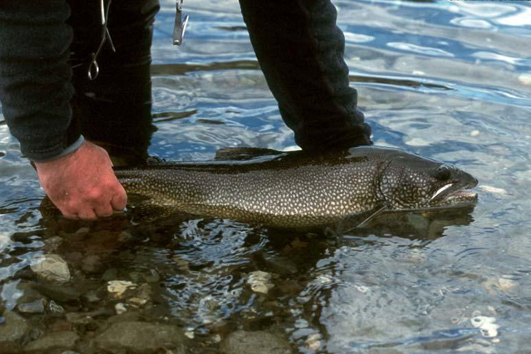 6 FMZ 10: Lake Trout Operational Objectives and Management also provide direction to local groups when determining potential restoration projects. 1. Engage local districts Community Fish and Wildlife Involvement Program (CFWIP) partners and stewardship groups.