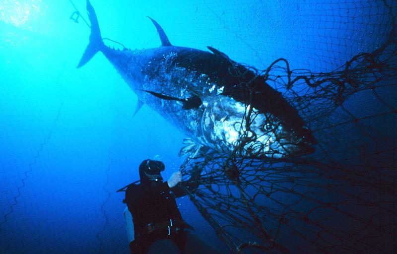 Each sector can have bycatch