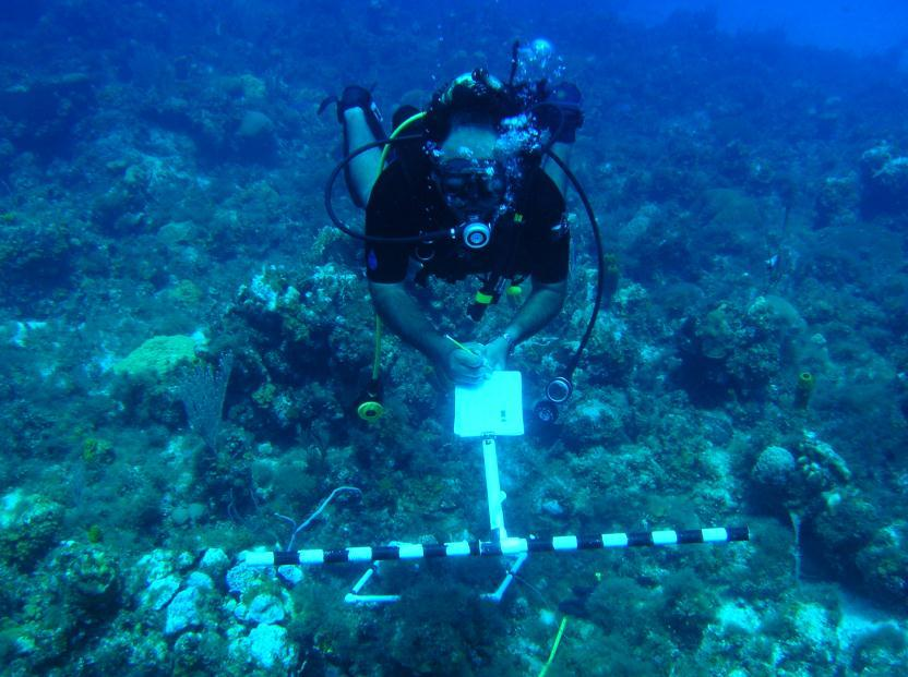 Figure 5: Fish survey along 30m transect using AGRRA method In addition, a 20-minute roving dive will be conducted at each station during which fish species were identified and given a frequency