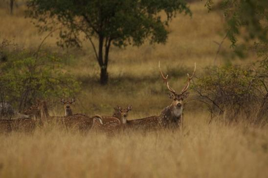 During the hunting week the stags were, and are continuing to rut, calling and looking about for hinds.