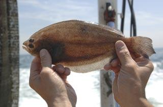 The two pictures on the left are of a fourspot flounder, so