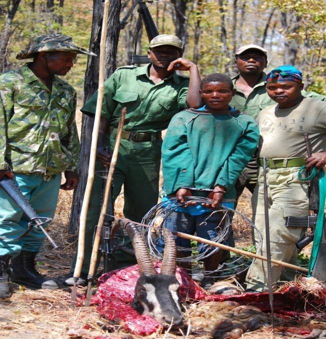 Challenges Experienced in Wildlife Conservation Poaching (Subsistence &