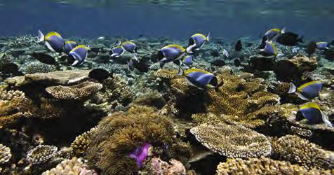 Excursions Snorkeling Excursions Explore the surrounding reef of Vittaveli and compare the different marine life with other reefs nearby. Snorkeling Exploration: Every morning we depart at 10.