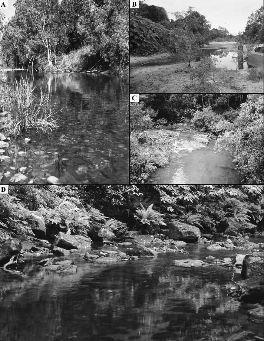92 Figure 37. (A) Crystal Ck, NE.Qld. Perennially flowing, riverine habitat of Macrobrachium auratum sp. nov. (B) Elliott R. at Guthulungra, ME.Qld. Seasonally-flowing, sandy, riverine habitat of Macrobrachium auratum sp.