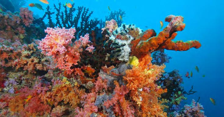 Many other interesting creatures inhabit this reef and any dive on the house reef will