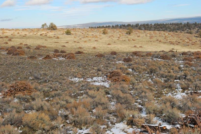 impact of fire, predation & non-native grasses