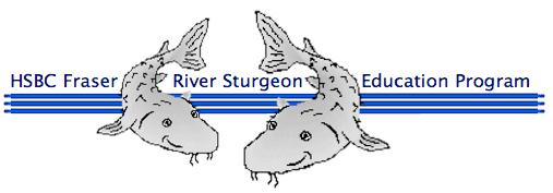 Big Idea: The mighty sturgeon has been on earth for more than 250 million years and can grow to over 6 metres in length.