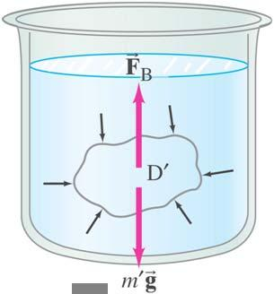 an object immersed in a fluid is equal to