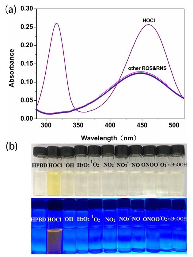5. Colorimetric response of HPBD to various ROS and RNS Fig.S15 (a) Absorption spectra of HPBD (10 μm) upon adding various ROS and RNS (40 μm) in a PBS buffer-ch 3 CN(v/v=4/1, 20 mm PBS, ph 7.4).