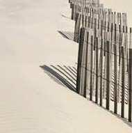 A B Figure 8A, B. Examples of dune fences with sand accumulation. deposits 40 feet wide and 3.5 feet high (Herrington 2004).