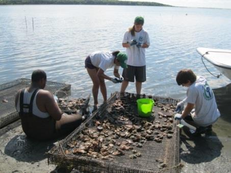 Reduce nitrogen loading into the bay by raising oysters which will filter it out of the bay.