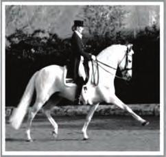 net AUG 5-6 Dressage Clinic with David Marcus at Iron Rock Dressage (Fairfield) contact Meghan Laffin 631/624-2267 Contact@ ironrockdressage.