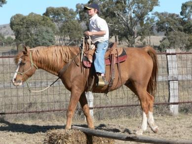 IHI Intensive Horsemanship Courses Have you ever wanted to 'work' in the Horse Industry? Would you like to study horses 'full time' for an exceptionally low cost?