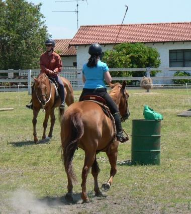 "You will introduce the ""ring rope"" to test and improve your horse's respect for you; as the distance between you increases so does the need for more and more respect."