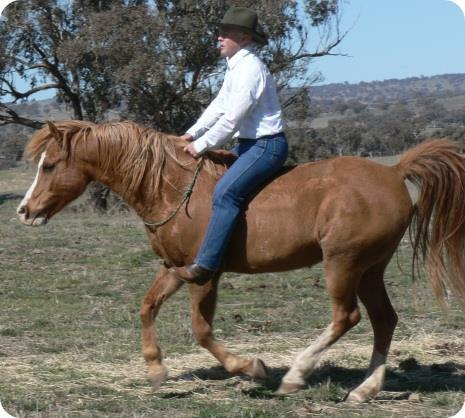 How would like to be able to ride your horse with just a stick for direction and control and be able to do drop-to-trot canter lead changes?