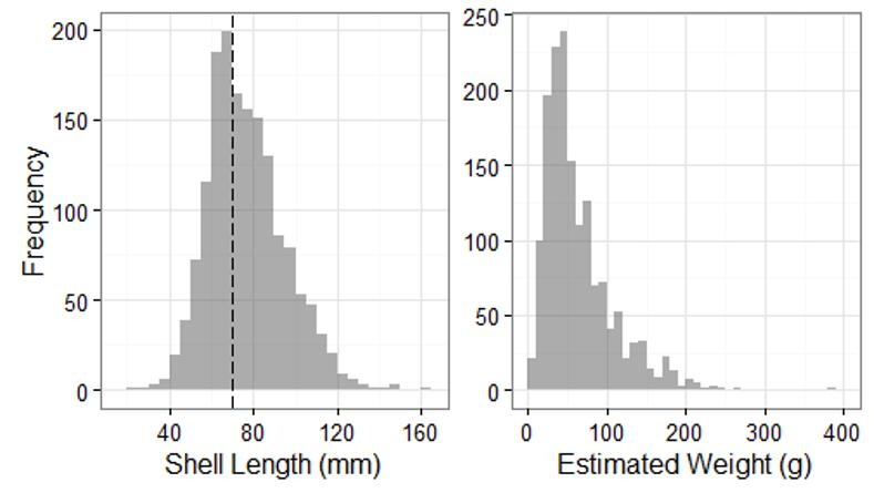 Figure 3. Frequency histograms of shell length and estimated weight of O.