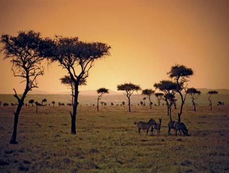 savanna, lie between desert areas and tropical