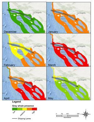 Graphic shows where gray whale tracks intersect with shipping