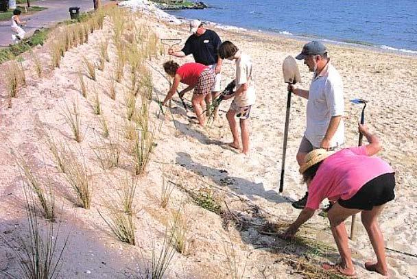 Option: C Planting Planting of beach crest areas to improve retention of material, reduce erosion and limit wave overtopping.
