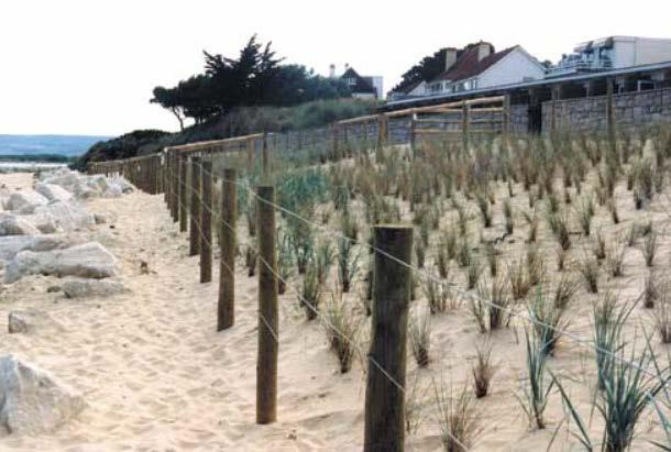 Spring (MHWS) tide level to establish vegetation / Key Issues / Considerations Adds to amenity Stabilises beach crest Reduces erosion and inundation risk Establishing plants can