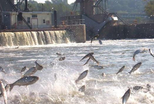 Affected Waters: Upper Mississippi Lake Mille Lacs Detrimental Effects: Jeopardize native