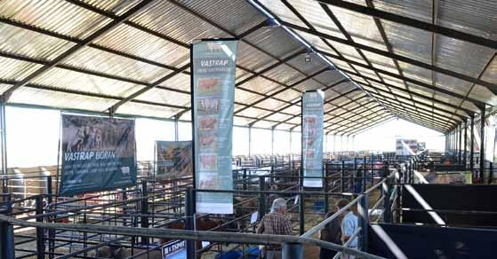 The Free State Boran Club hosted the Boran Expo on 13 March 2015 at Kroonboma. The Expo was held jointly with the Meatmaster Sheep Breeders Society.