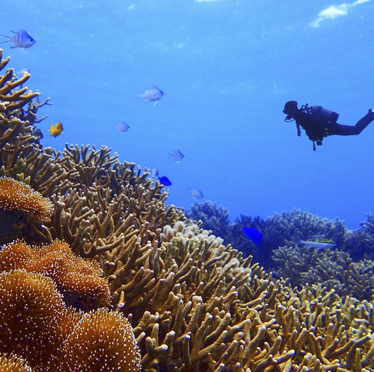SCUBA DIVE BELIZE BARRIER REEF The the second largest coral reef in the world is the closest of our diving destinations.
