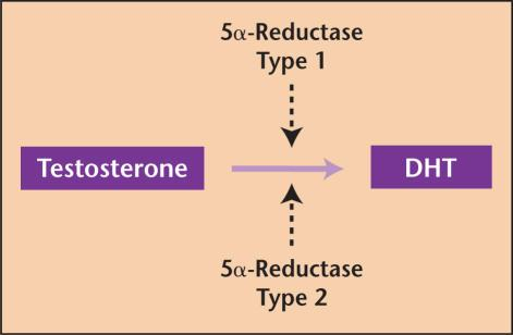 Fig.3:Testosterone conversion Two isoenzymes of 5α-reductase (Fig.4) have been discovered.