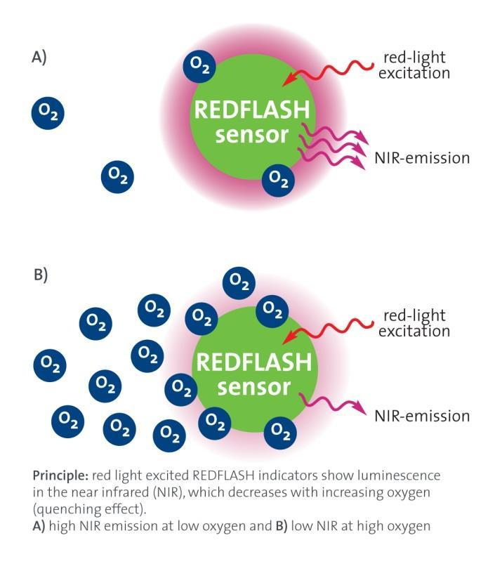 13.2 Measuring Principle The REDFLASH technology is based on the oxygen-sensitive REDFLASH indicator showing excellent brightness.