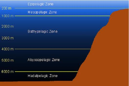 Figure 4. Depth Profile of Ocean Zones Source: Image produced by WPRFMC. Concept from http://www.seasky.org/monsters/sea7a4.html 3.2.