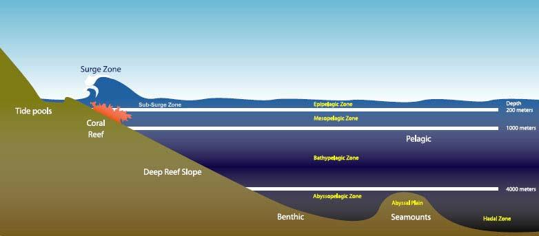 Figure 9: Benthic Environment Source: Produced by WPRFMC 3.3.4.