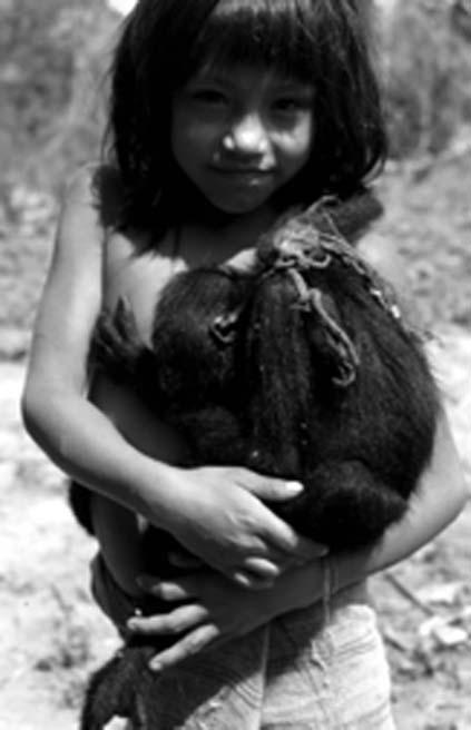 Primates and the Matsigenka 125 Figure 6.5. Female monkeys with young are taken disproportionately by Matsigenka hunters. Orphaned monkeys are raised as pets by women and children.